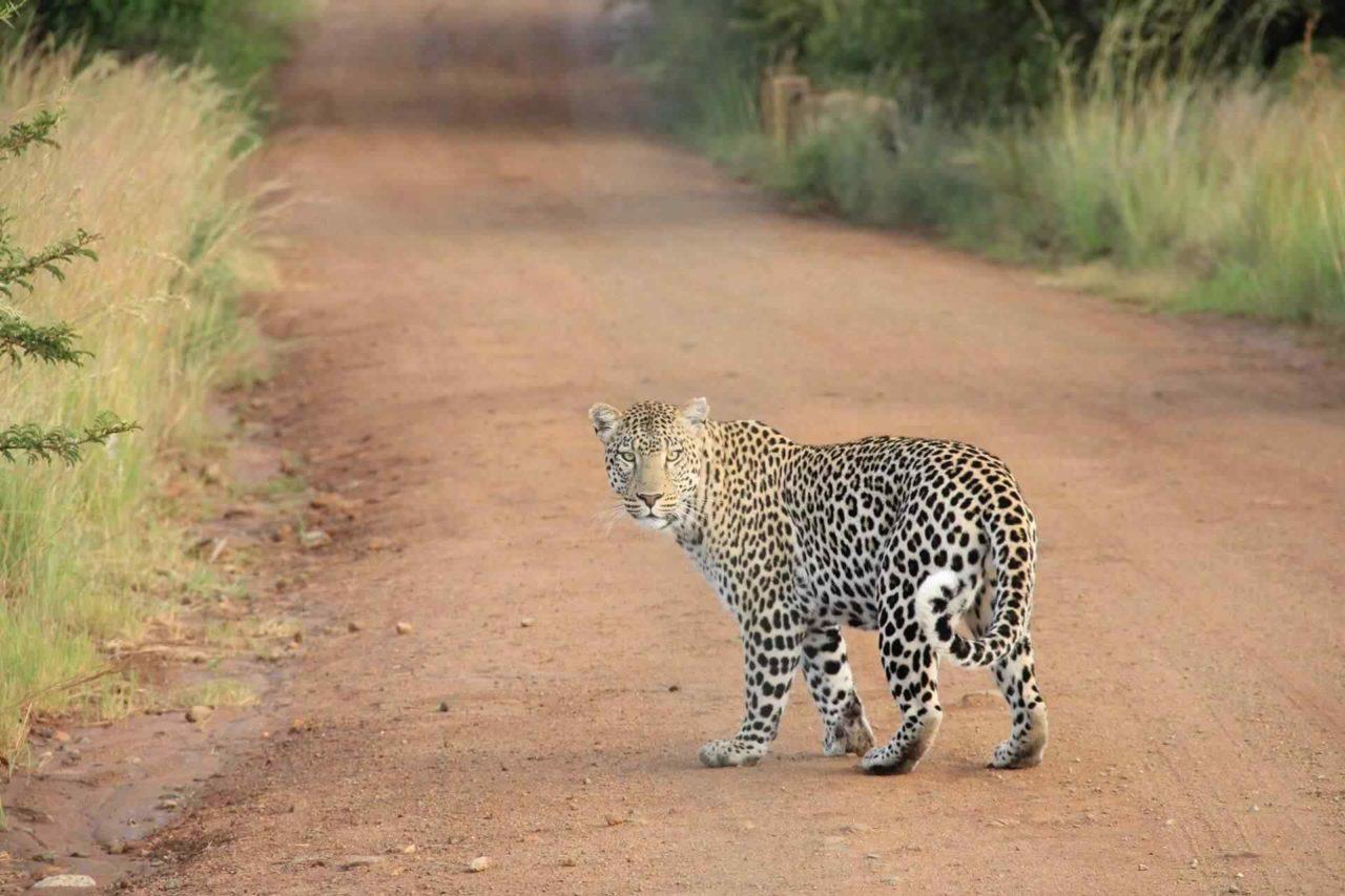 https://www.westafricanpilotnews.com/wp-content/uploads/2018/01/PETS-exsotics1-1-1280x853.jpg