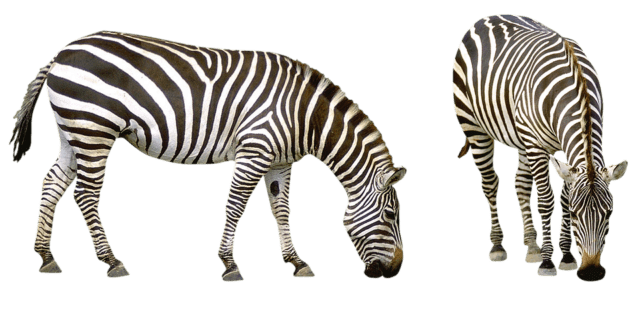 https://www.westafricanpilotnews.com/wp-content/uploads/2019/12/Zebra-640x315.png