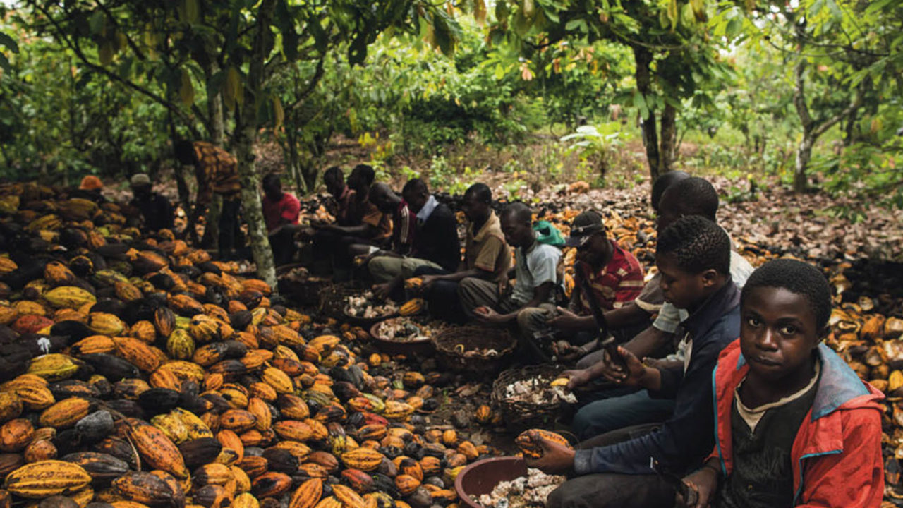 https://www.westafricanpilotnews.com/wp-content/uploads/2020/04/Cocoa-children-working-on-cocoa-farm-04-10-20-1280x720.jpg