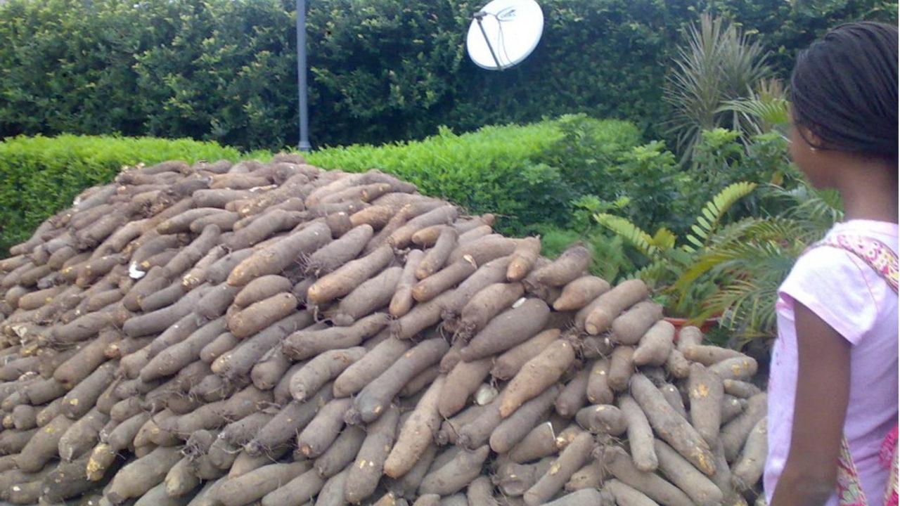 https://www.westafricanpilotnews.com/wp-content/uploads/2020/06/Yam-Nigeria-Benefits-06-09-20-1280x720.jpg