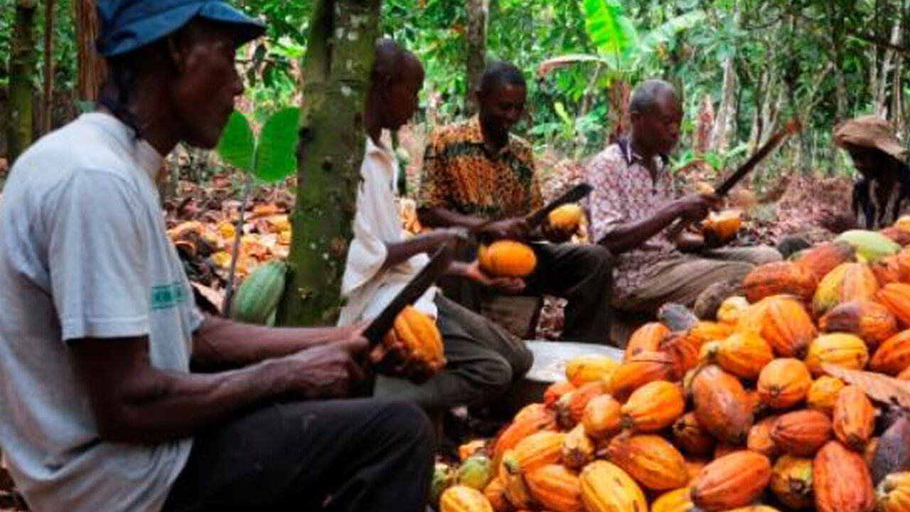 https://www.westafricanpilotnews.com/wp-content/uploads/2020/08/Agriculture-Cocoa-Production-08-10-20-1280x720.jpg