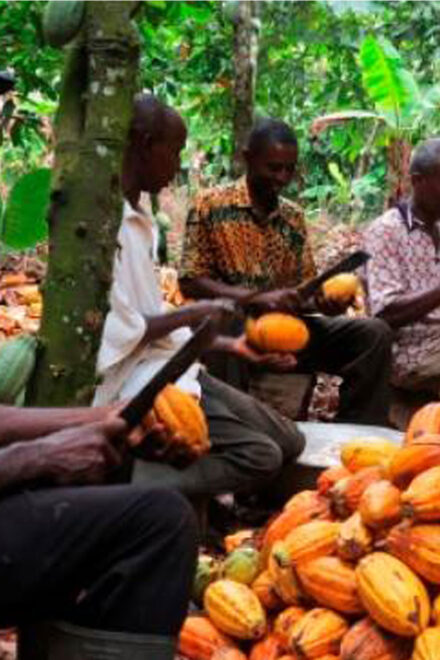 FG Distributes 20,000 Cocoa Seedlings, Inputs to Imo Farmers