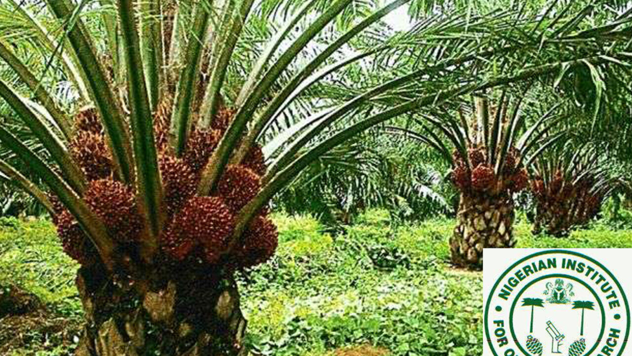 https://www.westafricanpilotnews.com/wp-content/uploads/2021/02/NIFOR-Nigerian-Institute-for-oil-Palm-Research-2-9-21-1280x720.jpg
