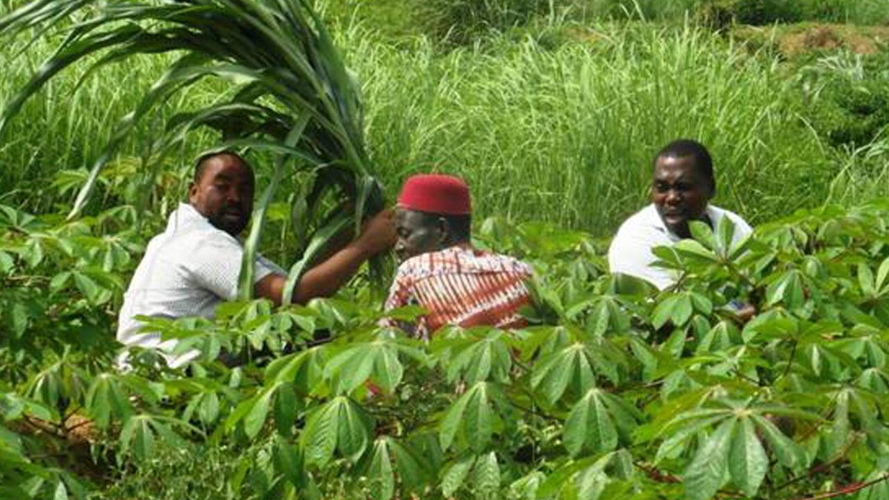 https://www.westafricanpilotnews.com/wp-content/uploads/2021/04/Cassava-Farmers-Ebonyi-State_4-26-21_FILE-1280x720.jpg