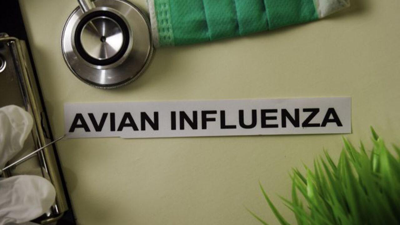 https://www.westafricanpilotnews.com/wp-content/uploads/2021/05/Bird-Flu-Avian-influenza-5-9-21_image-1280x720.jpg