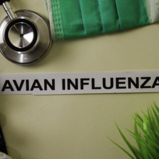 Bird Flu: Bauchi State Government Kills 27,000 Birds
