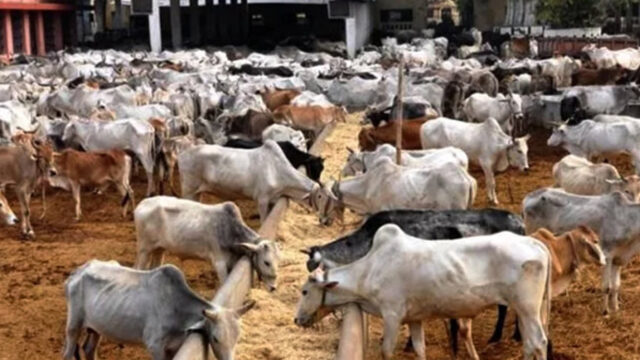 FG Set to Scale Up Contribution of Livestock to GDP, Minister