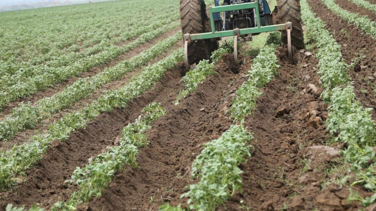 https://www.westafricanpilotnews.com/wp-content/uploads/2021/06/Agriculture-Nigeria-potato-field_FILE-1280x720.jpg