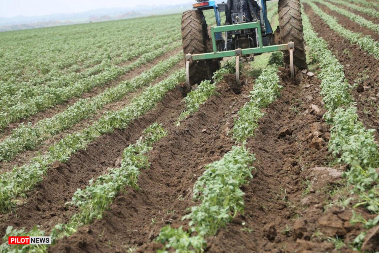 https://www.westafricanpilotnews.com/wp-content/uploads/2021/06/Agriculture-Nigeria-potato-field_FILE-1280x853.jpg