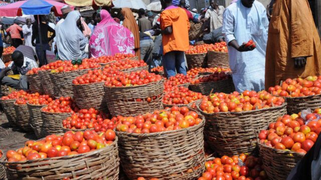 Tomato Dealers In Plateau loss of Over N29m, Seeks FG's Intervention