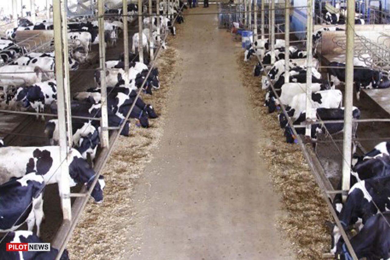 https://www.westafricanpilotnews.com/wp-content/uploads/2021/09/Dairy-Farm-Sokoto_file-1280x853.jpg