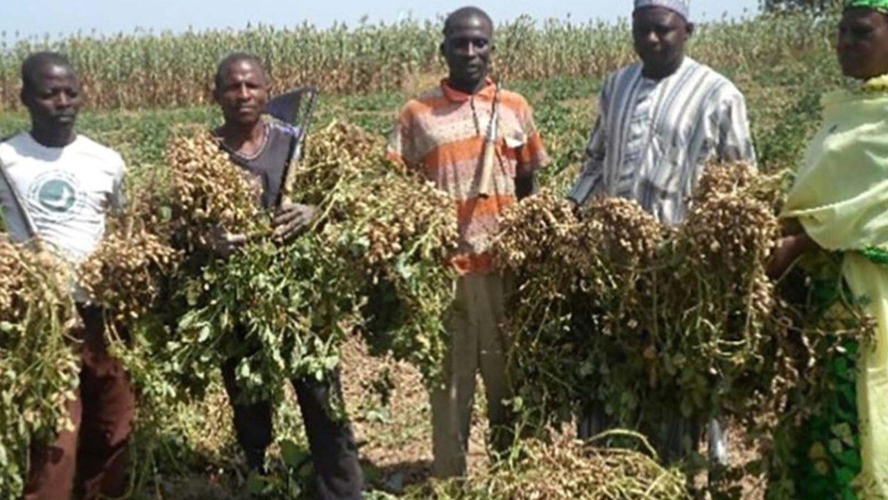 https://www.westafricanpilotnews.com/wp-content/uploads/2021/09/Groundnut-farmers-picture_file-1280x720.jpg