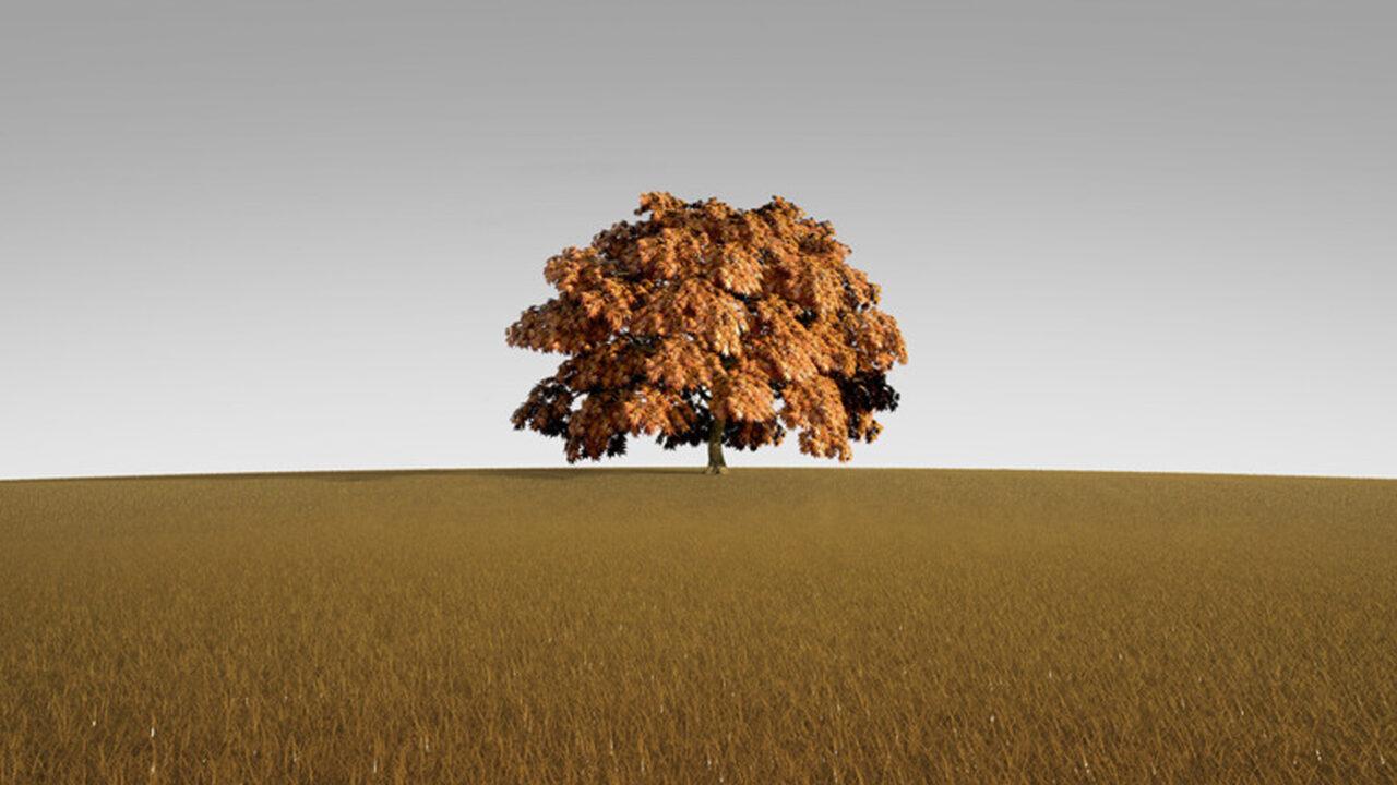 https://www.westafricanpilotnews.com/wp-content/uploads/2021/09/Tree-alone-tree-in-autumn_illustration_canstockphoto_WAP-1280x720.jpg