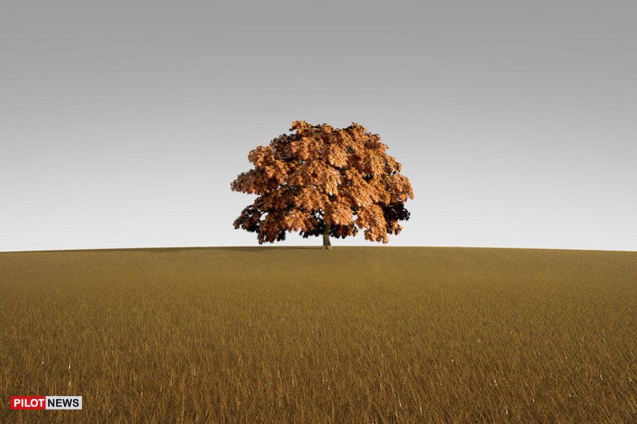 https://www.westafricanpilotnews.com/wp-content/uploads/2021/09/Tree-alone-tree-in-autumn_illustration_canstockphoto_WAP-1280x853.jpg